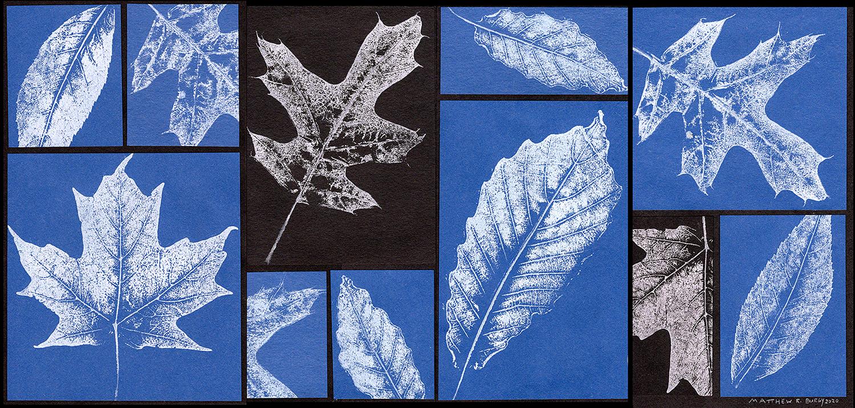 Leaf Texture Collage