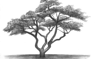 Landscapes & Trees